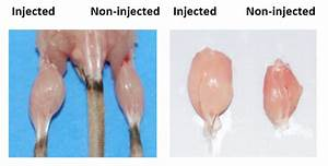 Myostatin Inhibitor  Ace