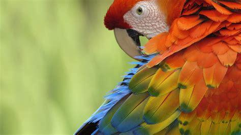 Birds Parrot Wallpaper Hd Desktop Wallpapers 4k Hd