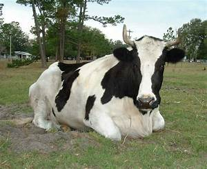 Domestic Animals Images Pictures