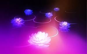 Lotus HD Wallpaper - WallpaperSafari