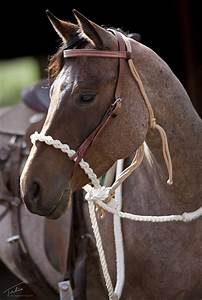 Hard 4 Plait Hackamore   Hackamore Bridle