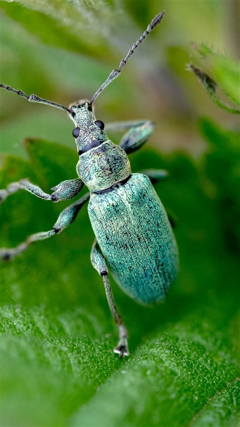 Beetle Insect Wallpapers FREE Pictures on GreePX