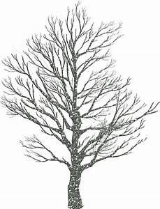 How to draw winter trees: 10 pics
