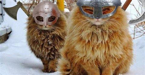 viking kitties animals pinterest vikings kitty  cat