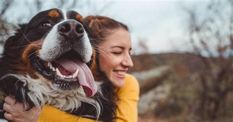 national rescue dog day    honor dogs today