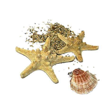 etoile de mer deco etoile de mer picmix