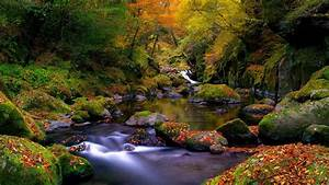 A beautiful autumn landscape in the forest