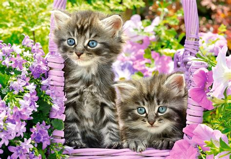 puzzle kittens  summer garden castorland