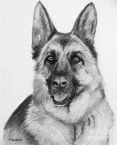 German Shepherd Drawn In Charcoal German Shepherds