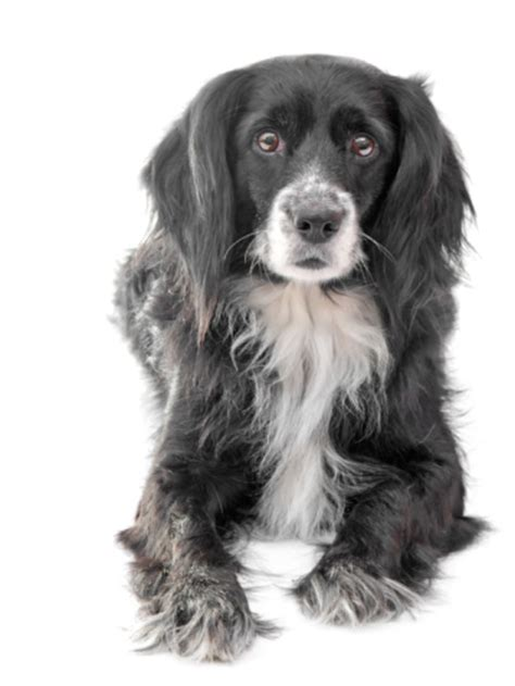 dangers  xylitol  dogs