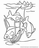 Coloring Fish Pages Printable Tropical Pet Sheets Pets Animal Dog Print Adult Krypto Honkingdonkey Super Activity Clipart Fun Fishes Popular sketch template
