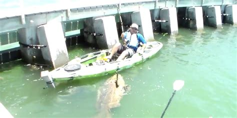 grouper goliath florida kayak catching