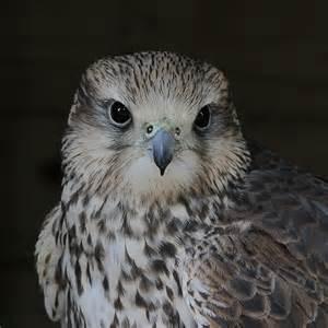 Birds of Prey Identification