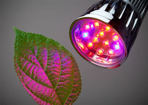 best grow light bulbs 5 best led grow lights for indoor gardening projects