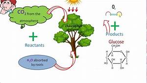 What Is The Site Of Photosynthesis
