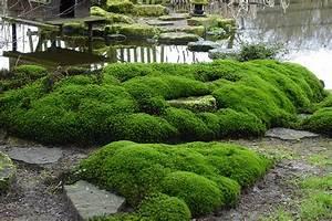 Pflanzen Im Japanischen Garten : bodendecker f r japanischen garten kreative ideen f r innendekoration und wohndesign ~ Sanjose-hotels-ca.com Haus und Dekorationen
