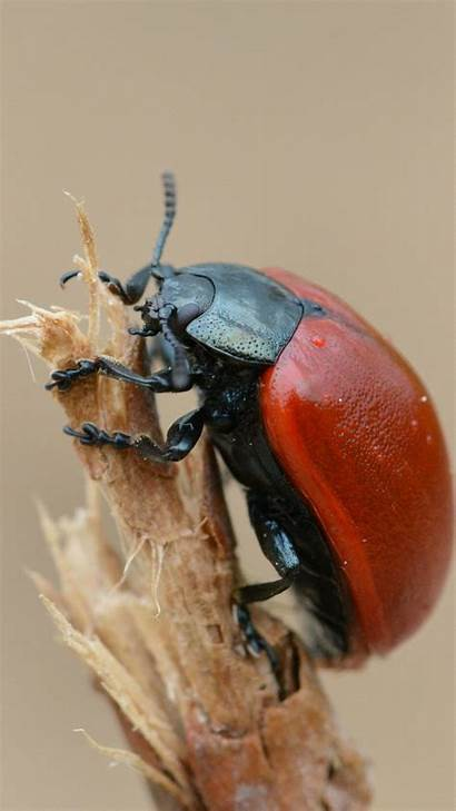 Beetle Insect Wallpapers Greepx Insects Armor
