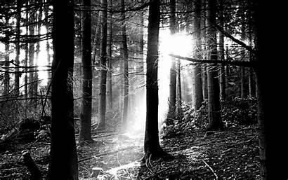 Forest Nature Scenes Dark Desktop Backgrounds Wallpapers