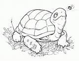 Coloring Printable Turtle Tortugas Colorear Turtles Cartoon Dibujos Stamps Pintar Bird Tortuga Colouring Stamp Digi Adult Animales Animal Ninja Crafts sketch template