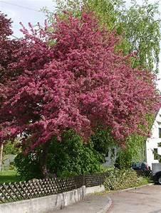Rote Blätter Baum : rot wenigbluetig ~ Michelbontemps.com Haus und Dekorationen