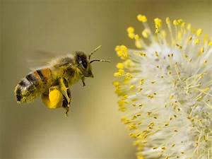 Welcome To Amazing World  Pollen
