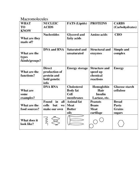 12 Best Images Of Biology Macromolecules Worksheets  Macromolecules Chart Worksheet, Organic