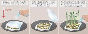 Comment Faire Germer Une Graine : faire pousser des graines dans du coton ooreka ~ Melissatoandfro.com Idées de Décoration