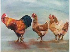 Da lachen ja die Hühner Tiere, Tierwelt, Schatten, Feder