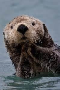 Portrait Sea Otter