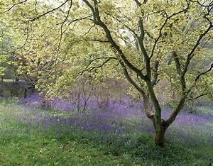 Que Planter En Juin : que planter sous les arbres d tente jardin ~ Melissatoandfro.com Idées de Décoration
