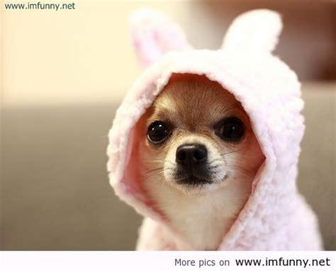 Fun Cute Dog Funniest