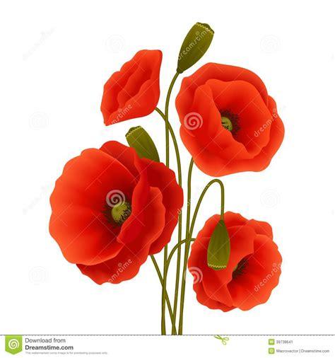 poppy flower poster stock vector image