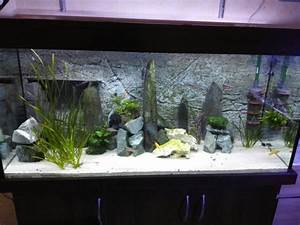 Welche Fische Passen Zusammen Aquarium : ich kann mich nicht entscheiden schwarzer oder wei er ~ Lizthompson.info Haus und Dekorationen