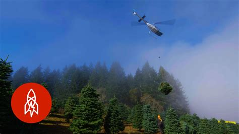 harvesting one million christmas trees by helicopter youtube