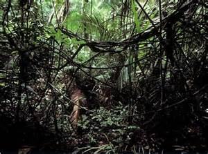 Animals That Live in the Tropical Rainforest Forest Floor