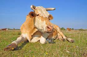 Agriculture and Livestock Remain Major Sources of ...