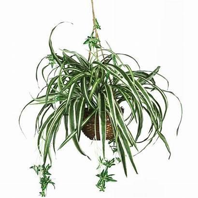 Plant Hanging Spider Basket Silk Plants Indoor