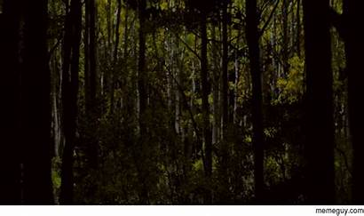 Forest Night Drone Lighting Magical Effects Using