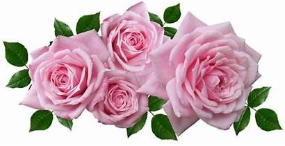 Roses Arrangement Floral Romantic Garden