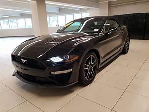 Used 2019 Ford Mustang EcoBoost Premium Black   Miami, FL