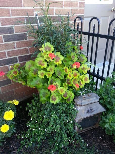 Container Gardening Ideas Pinterest Photograph  Container P