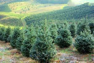 nc christmas tree farms open this weekend asheville nc mountain travel tips