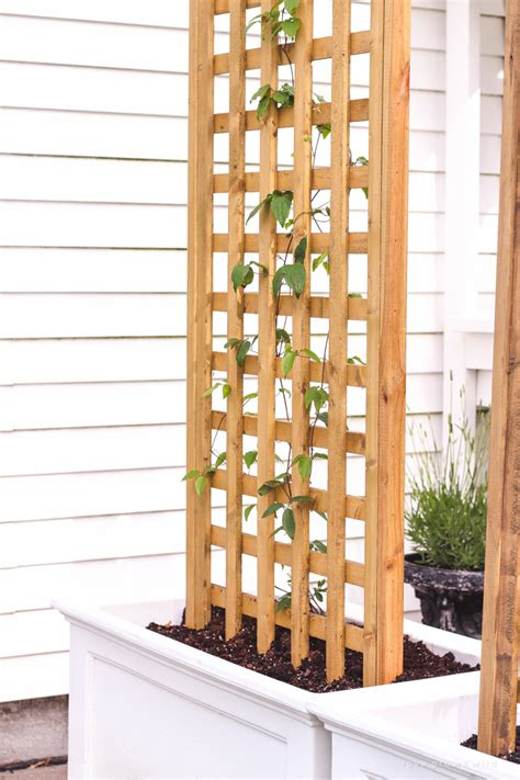 diy trellis planter grows