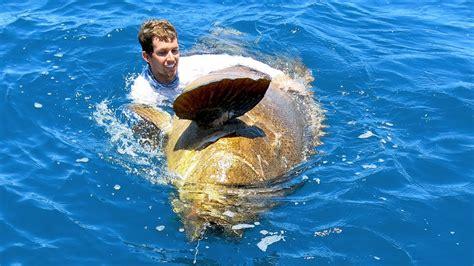 grouper goliath fish caught handline enormous