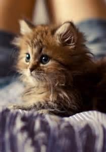 So Adorable Kitten Cute Cats