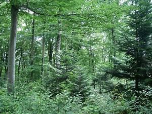 Bilder Vom Wald : wald amt f r wald jagd und fischerei kanton solothurn ~ Yasmunasinghe.com Haus und Dekorationen