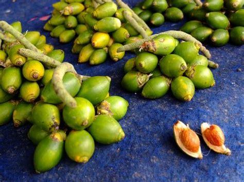 manfaat buah pinang muda untuk pria dan wanita