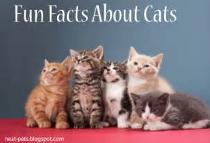 information about cats facts about cats neat pets dogs cats