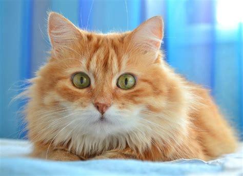 eye in cats petmd