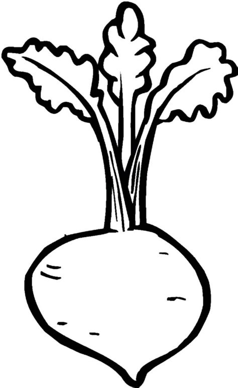 beet color medicine plant beets coloring pages best place to color